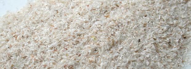 psylliumseed